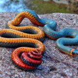 17 животных с неожиданной, необычной окраской
