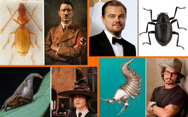 24 вида животных, названные в честь знаменитых людей