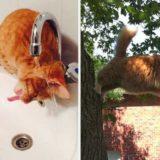 30 глупых кошек, которые заставят вас улыбнуться