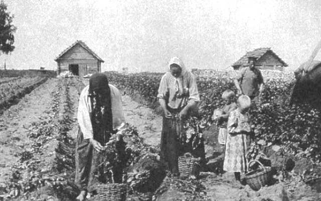 Что на Руси выращивали в огороде