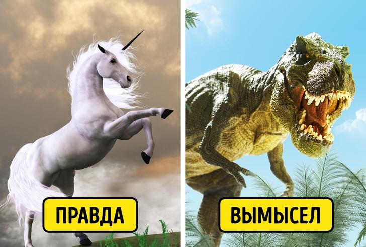 Динозавров никогда не существовало, а их скелеты — подделка