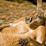 10 фактов об Австралии, которые способны вас удивить