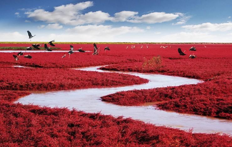 Красный пляж Паньцзинь (Panjin Red Beach), Китай