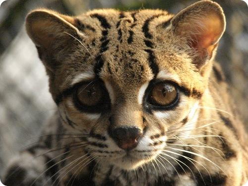 Необычные животные мира с описанием с картинками