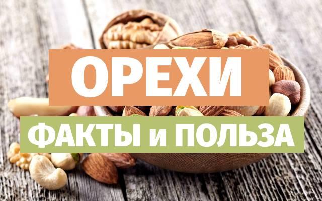 Полезные орехи и их уникальные свойства