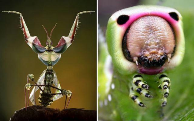 Самые необычные насекомые нашей планеты
