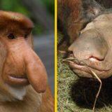 Странные и редкие животные, о которых вы не знали