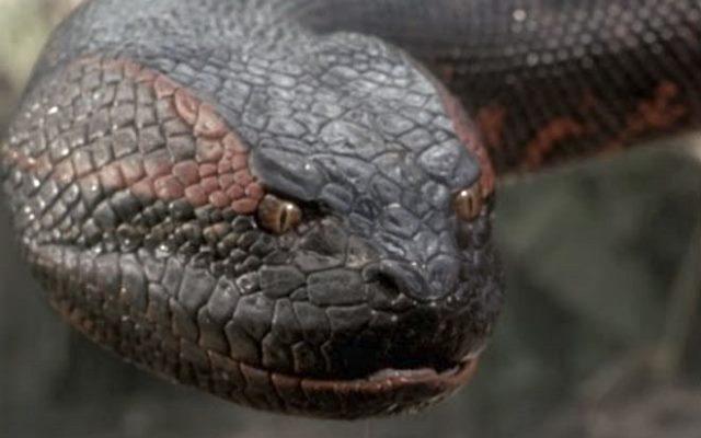 Жуткие существа живущие в Амазонии