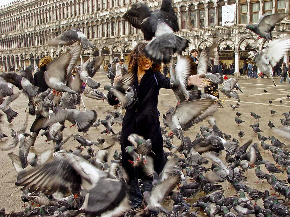запрещено кормить голубей