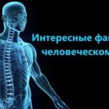 Интересные и удивительные факты о человеческом теле
