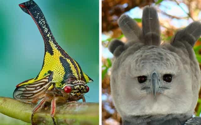 Необычные животные с фантастическим внешним видом