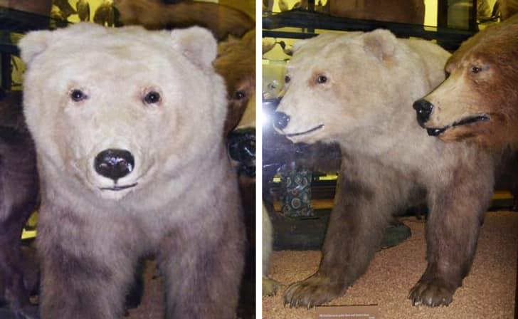 Медведь Гролар