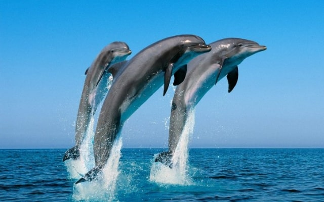 25 крутых и интересных фактов о дельфинах