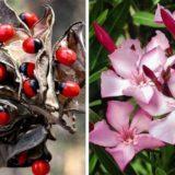 10 опасных растений, которые хотят и способны вас убить