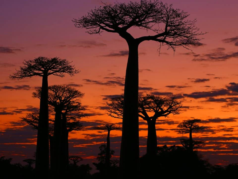 22. Мадагаскар