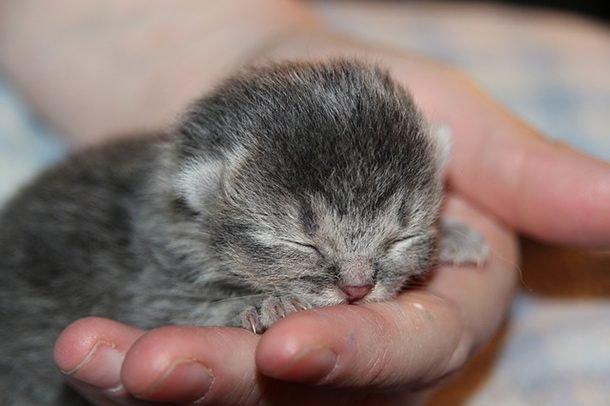 Самая маленькая кошка
