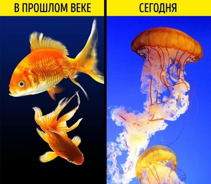 Медуза в качестве домашнего питомца