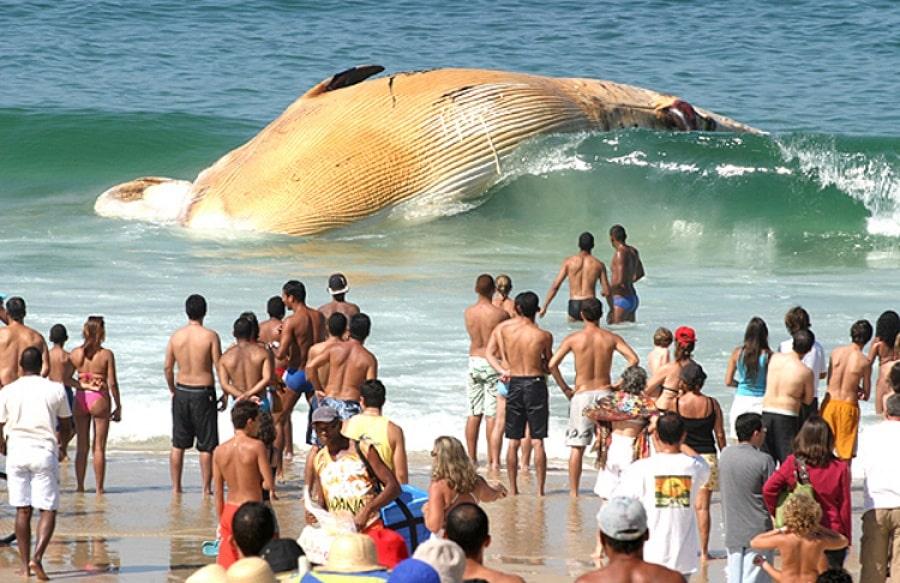 Кит на пляже