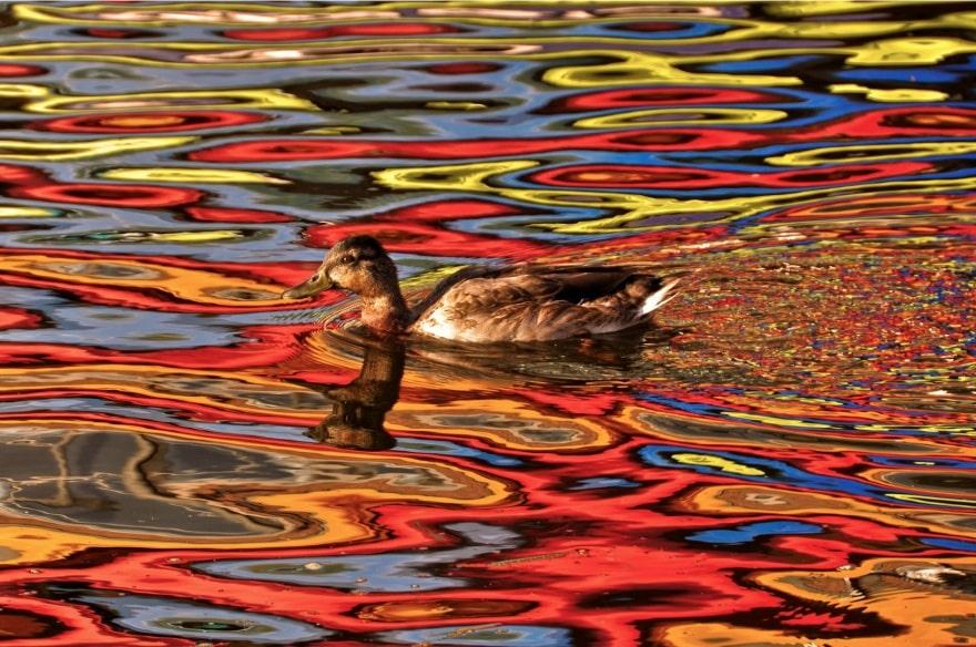 Краски осени отражаются в воде