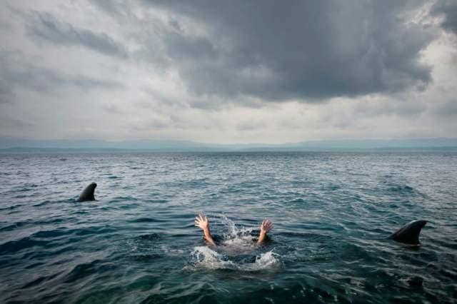 Массовые нападения акул