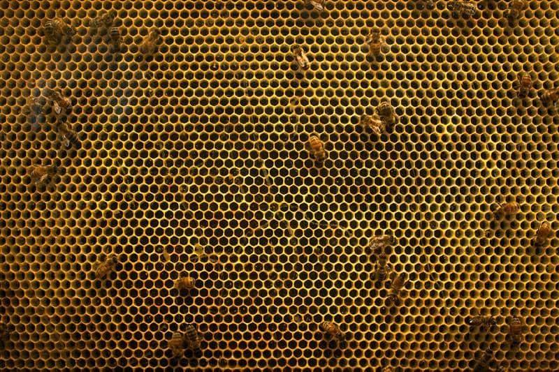 Сколько пчел в улье