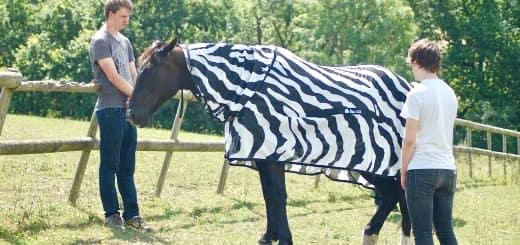 Ученые выяснили, зачем зебре нужны полоски