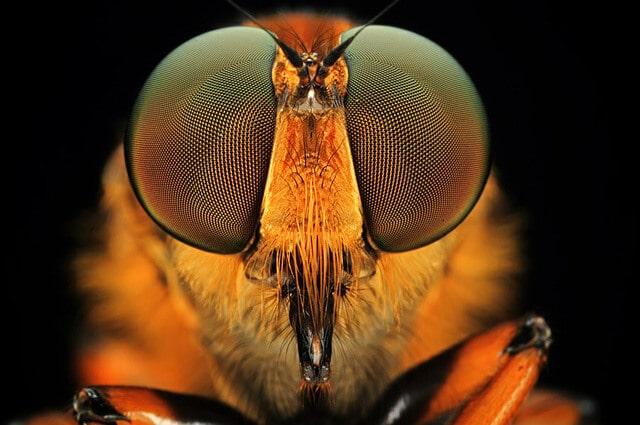Зрение пчелы