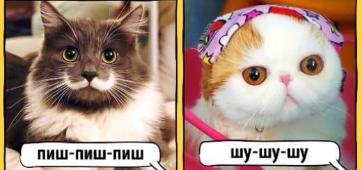 как в разных странах подзывают котов