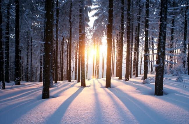 солнце зимой светит ярко, а не греет