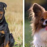 10 наиболее умных пород собак, которые легко поддаются дрессировке