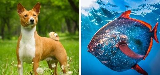 10 самых странных и необычных животных