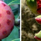 20 съедобных экзотических плодов, о которых многие даже не слышали