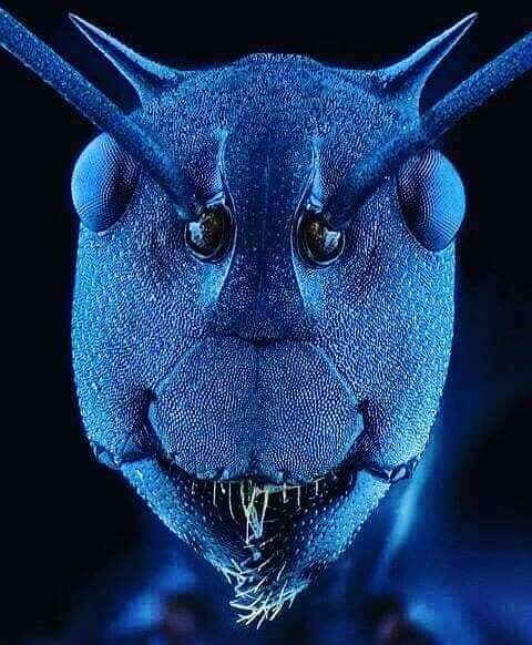 снимок муравья