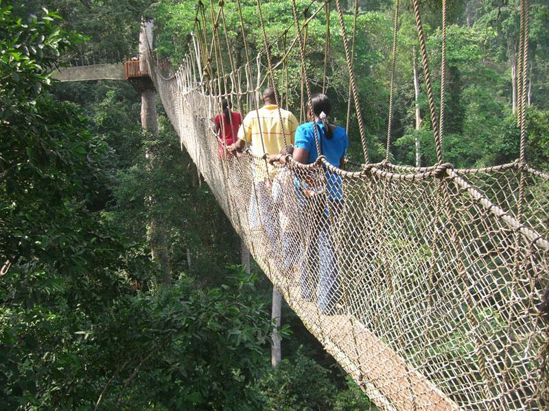 Подвесной мост Canopy Walk, Гана