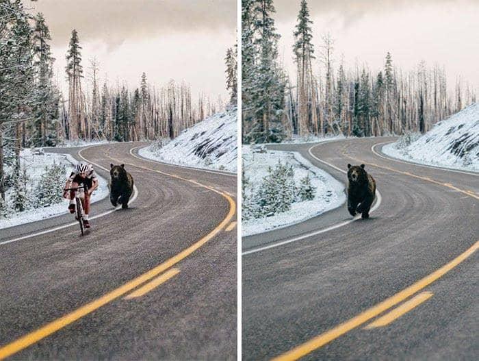Медведь, преследующий велосипедиста