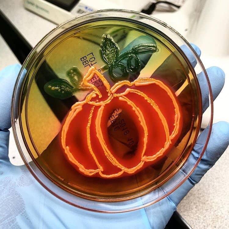 Можно рисовать бактериями