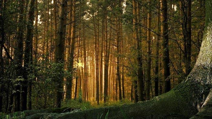 На Земле деревьев больше, чем звезд в нашей Галактике