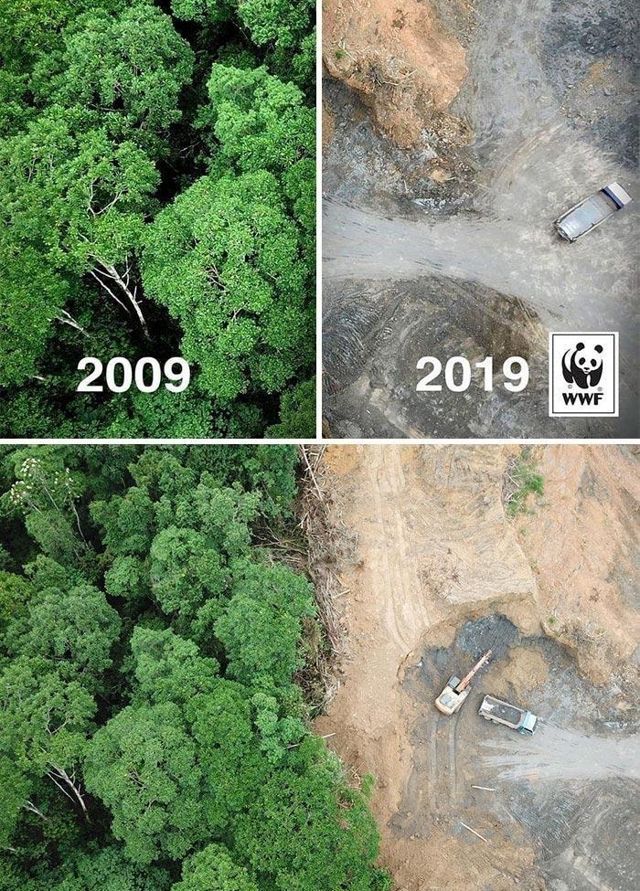 Проблема вырубки лесов