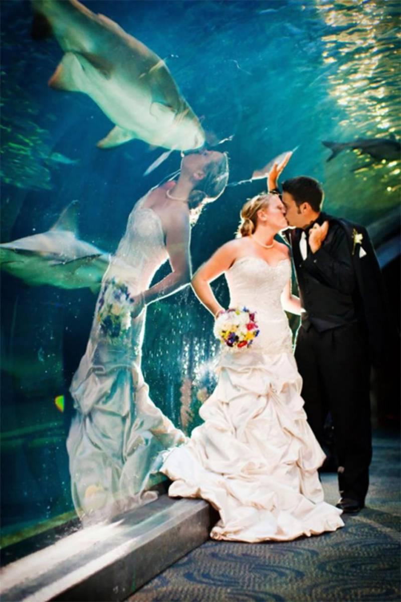 любовь к акулам