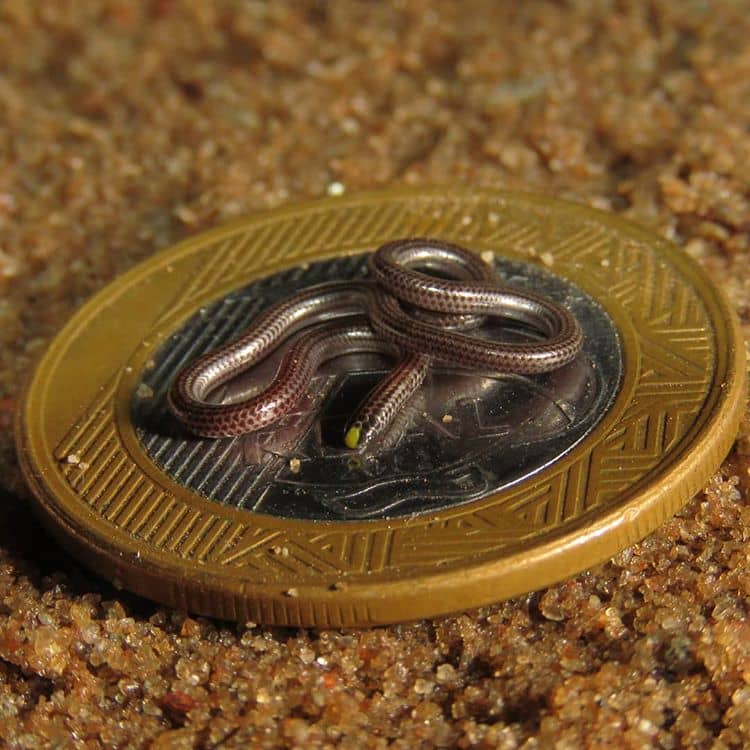 маленькие змеи