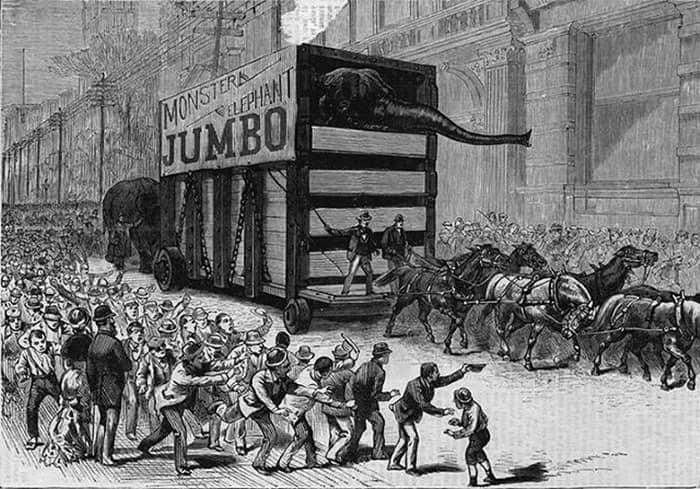 Но парад слонов развеял любые сомнения