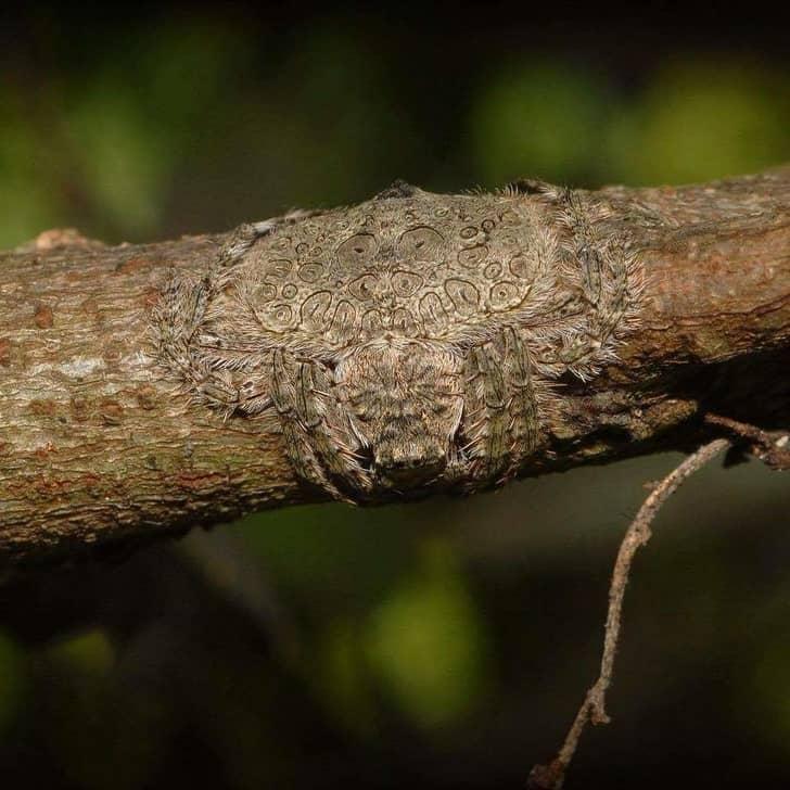 паук может обернуть свое тело вокруг ветки дерева