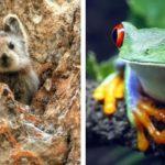 20 редких животных, увидеть которых — большая удача!