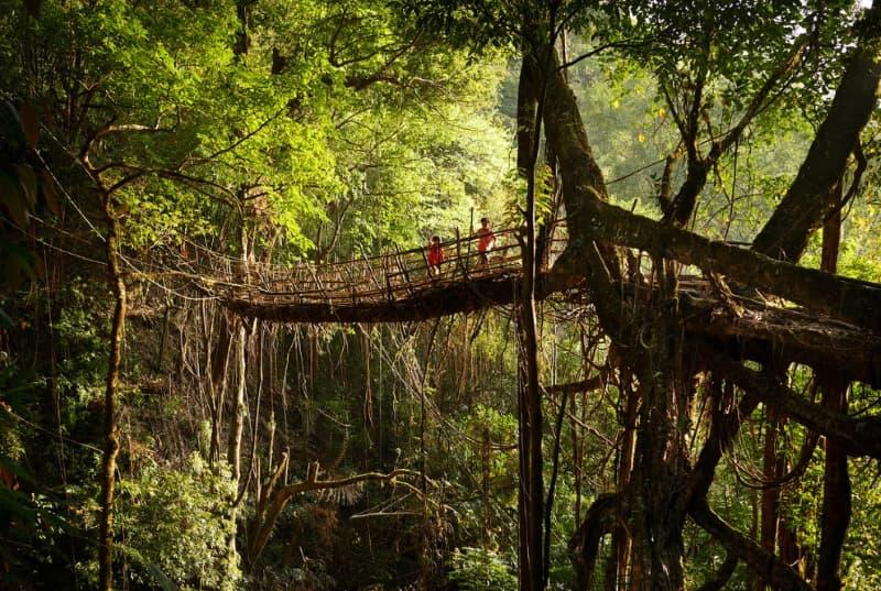 Самое влажное место на планете: Деревня Маусинрам, Индия