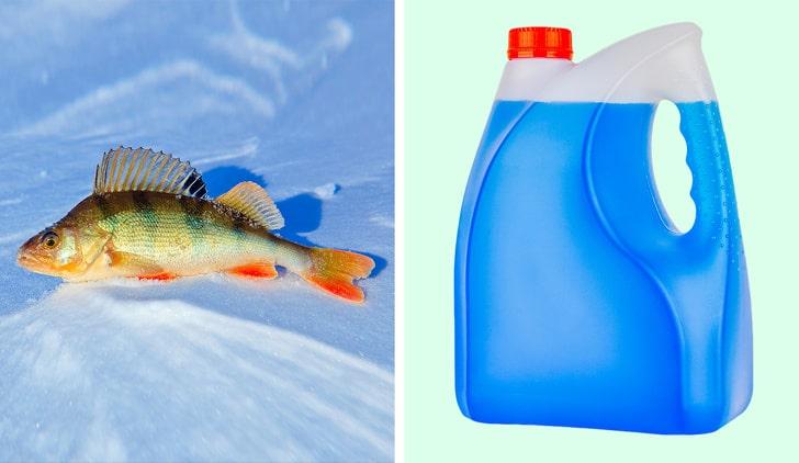 Почему рыбы зимой не промерзают насквозь