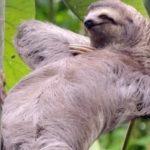 Топ 10 самых медленных животных в мире