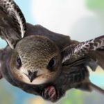 10 месяцев полета: какая птица способна так долго лететь без остановки