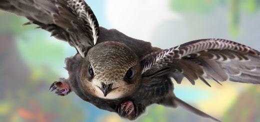 какая птица способна так долго лететь без остановки