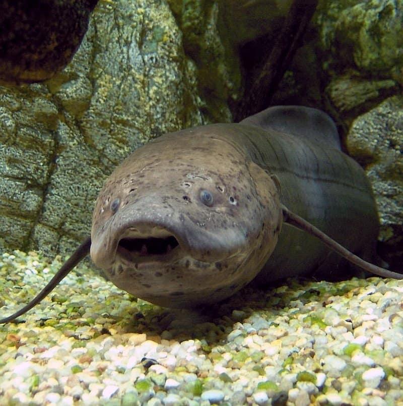 Какие рыбы спят под землей?