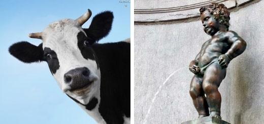 20 интересных фактов о молоке